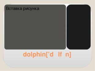 dolphin['dɒlfɪn]