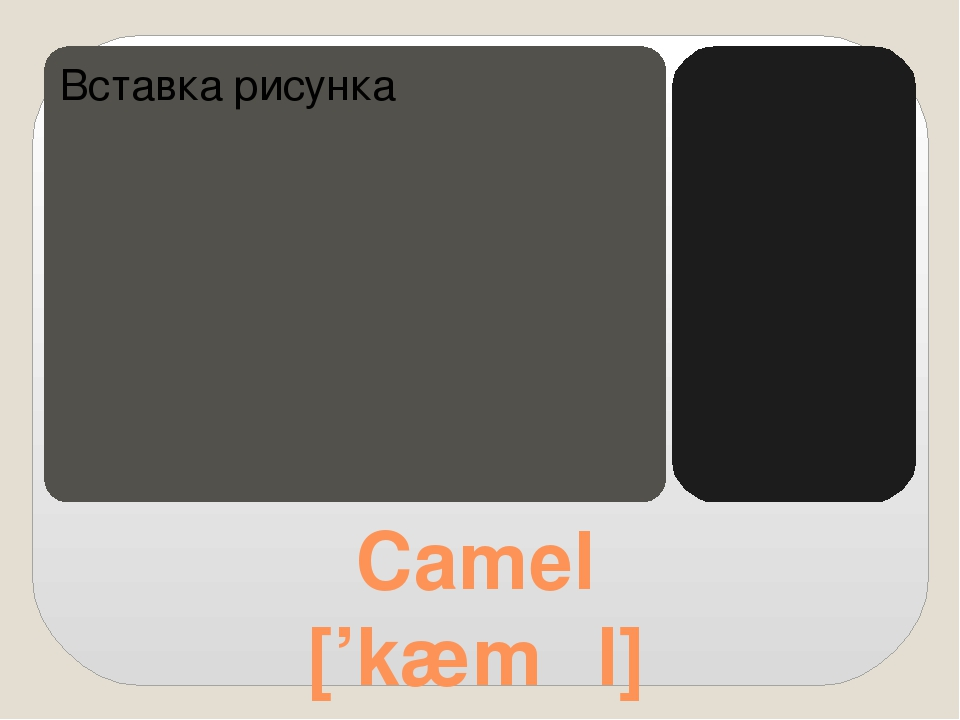 Camel ['kæməl]