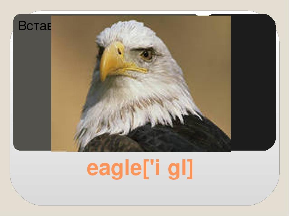 eagle['iːgl]