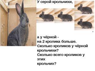 У серой крольчихи, а у чёрной - на 2 кролика больше. Сколько кроликов у чёрно