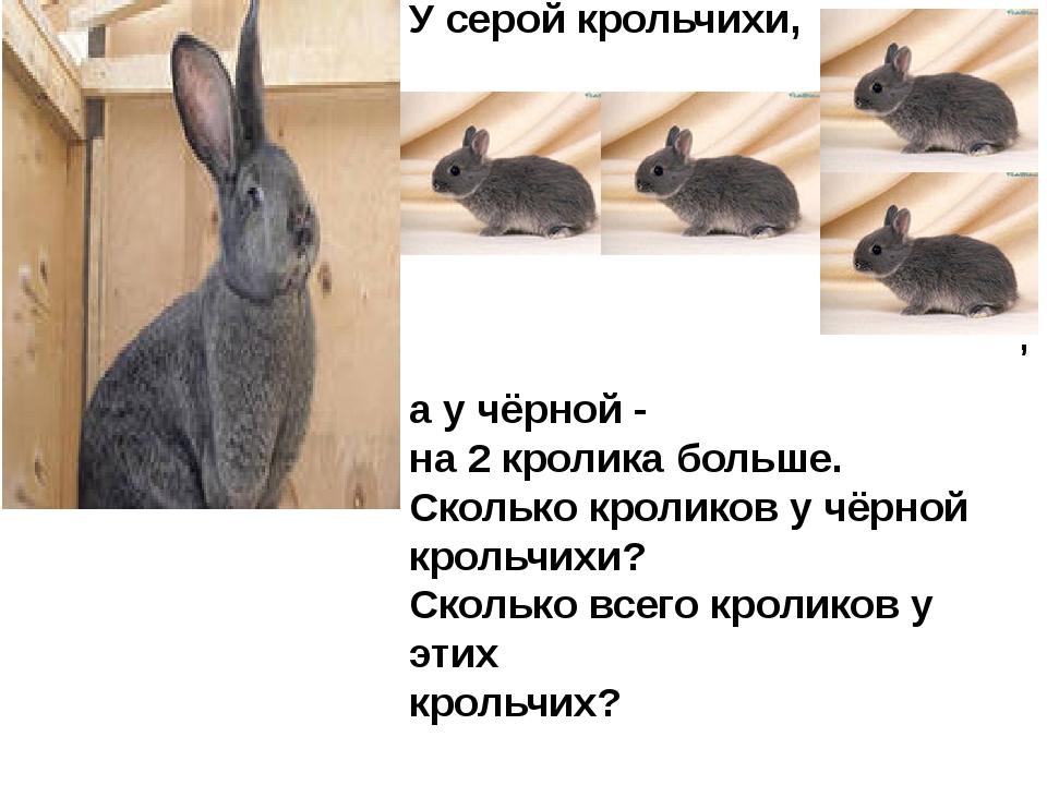 У серой крольчихи, а у чёрной - на 2 кролика больше. Сколько кроликов у чёрно...