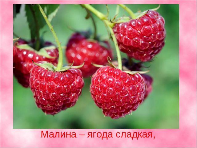 Малина – ягода сладкая,