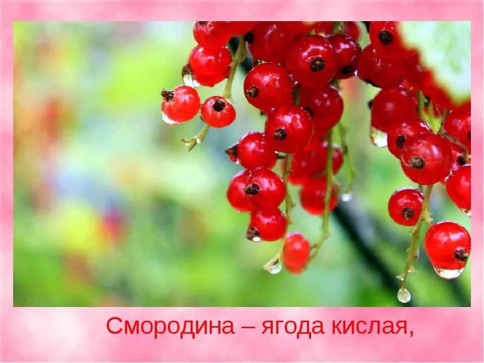 Смородина – ягода кислая,