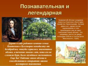 Познавательная и легендарная Знаменитой яблони в родовом поместье Ньютона в В