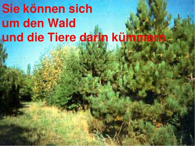 Sie können sich um den Wald und die Tiere darin kümmern