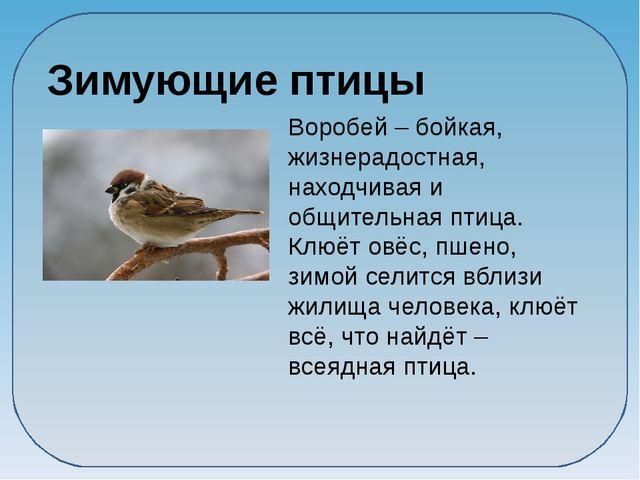 Воробей – бойкая, жизнерадостная, находчивая и общительная птица. Клюёт овёс...