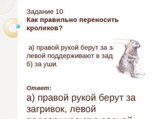 Задание 10 Как правильно переносить кроликов? а) правой рукой берут за загрив