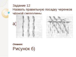 Задание 12 Назвать правильную посадку черенков чёрной смородины. а) б) Ответ: