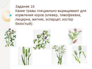 Задание 18 Какие травы специально выращивают для кормления коров (клевер, тим