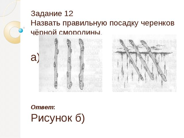Задание 12 Назвать правильную посадку черенков чёрной смородины. а) б) Ответ:...