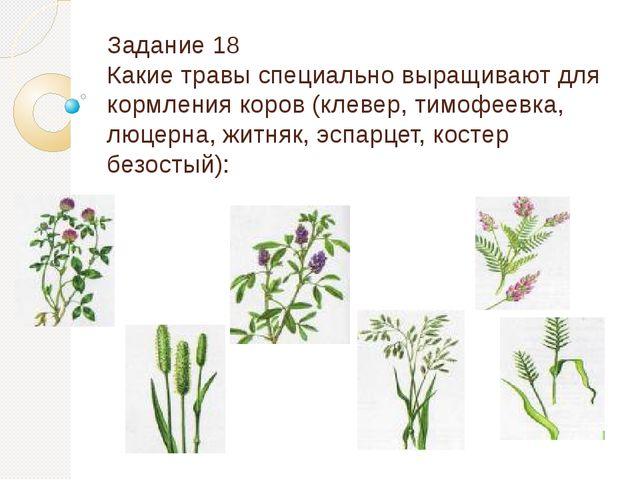Задание 18 Какие травы специально выращивают для кормления коров (клевер, тим...