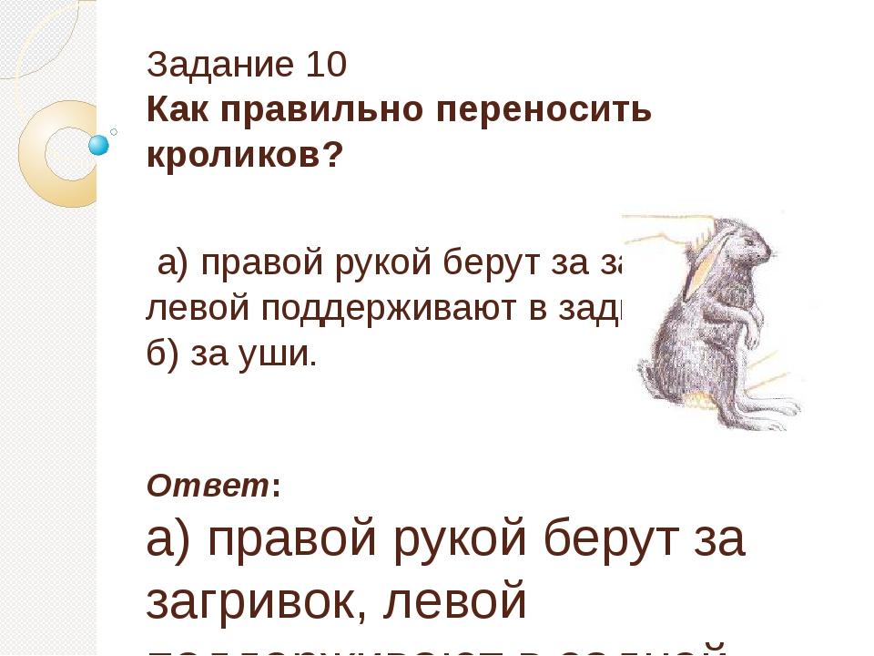 Задание 10 Как правильно переносить кроликов? а) правой рукой берут за загрив...
