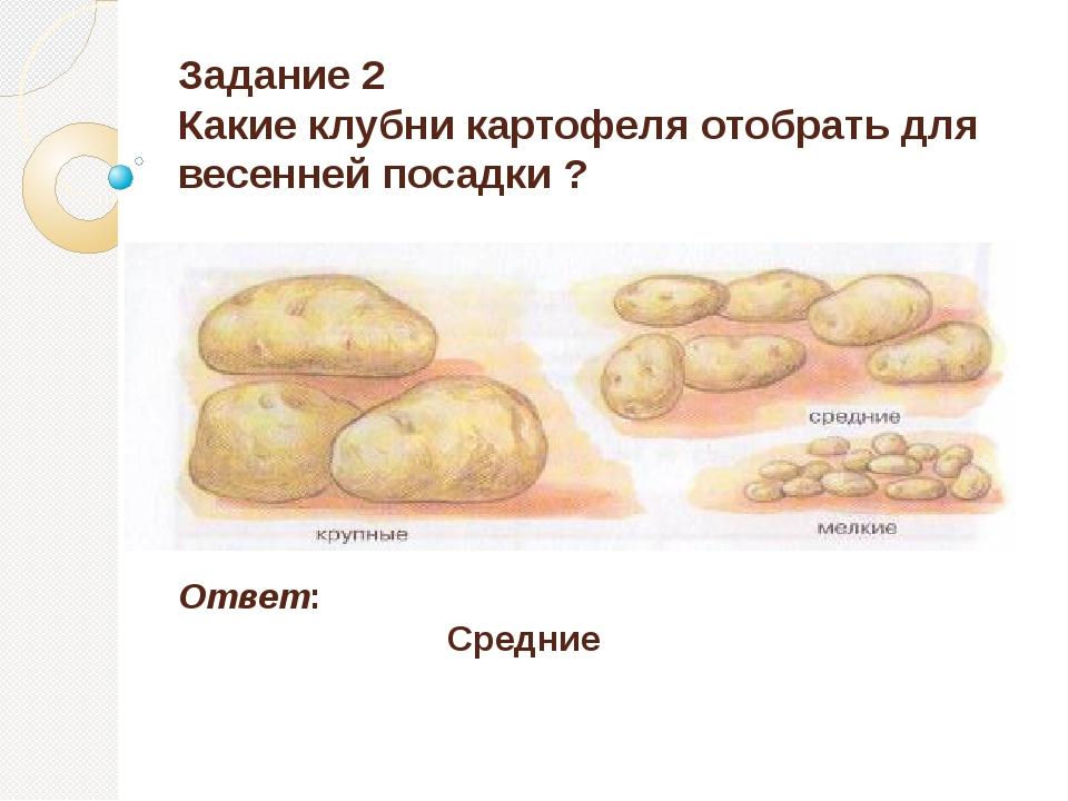 Задание 2 Какие клубни картофеля отобрать для весенней посадки ? Ответ: Средние