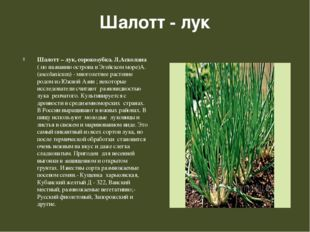 Шалотт - лук Шалотт – лук, сорокозубка. Л.Асколана ( по названию острова в Эг