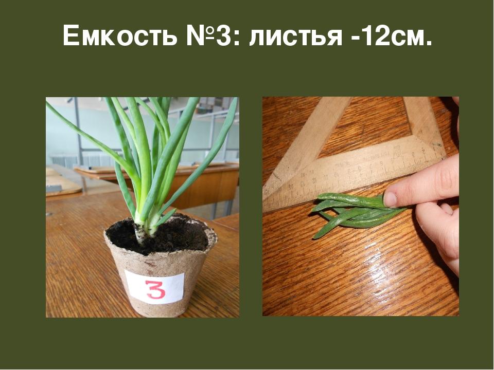 Емкость №3: листья -12см.