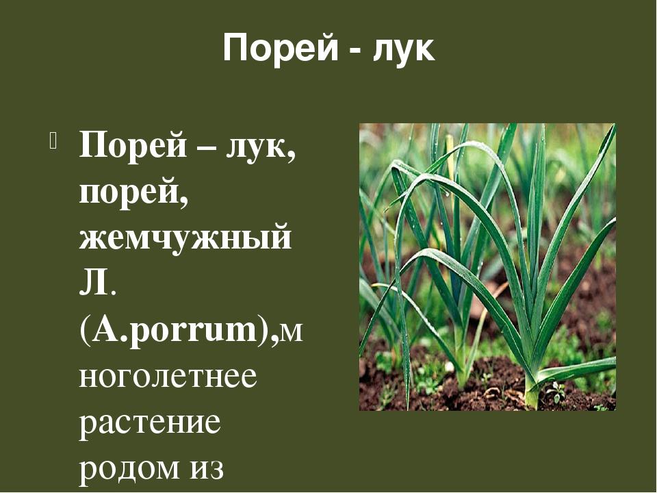Порей - лук Порей – лук, порей, жемчужный Л. (А.porrum),многолетнее растение...