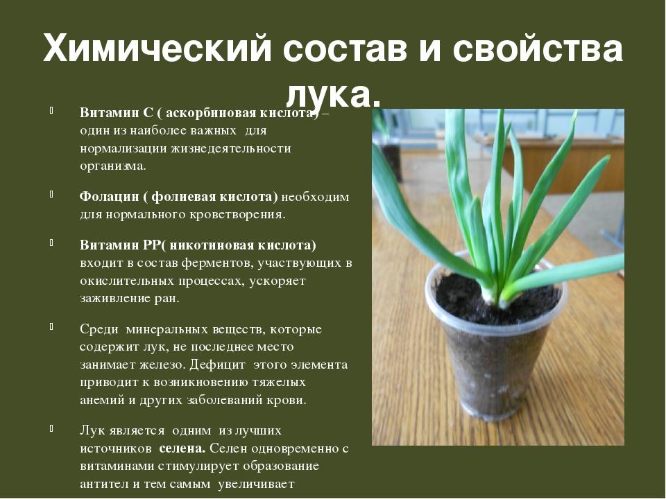 Химический состав и свойства лука. Витамин С ( аскорбиновая кислота) – один и...