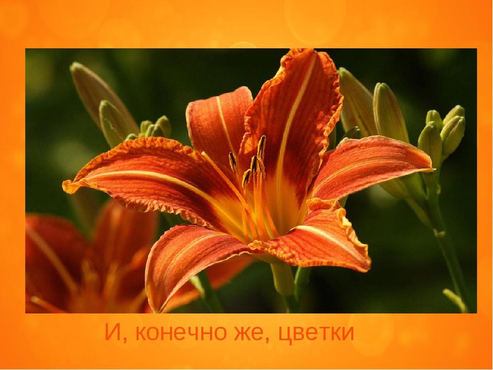 И, конечно же, цветки
