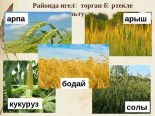 * Районда игелә торган бөртекле культуралар арпа арыш бодай кукуруз солы