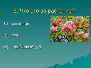 6. Что это за растение? Д) магнолия Л) туя М) пробковый дуб