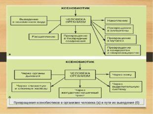 Превращения ксенобиотиков в организме человека (а) и пути их выведения (б)