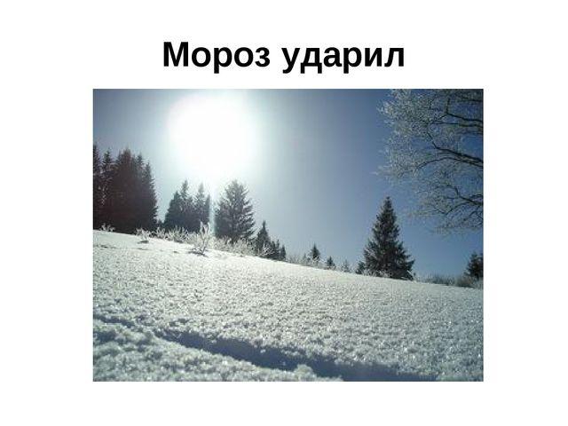 Мороз ударил