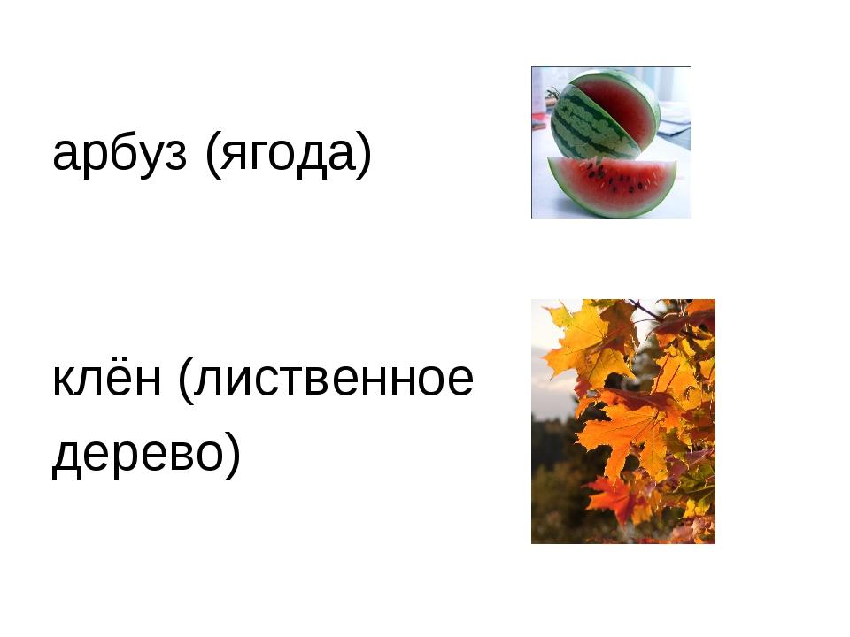 арбуз (ягода) клён (лиственное дерево)