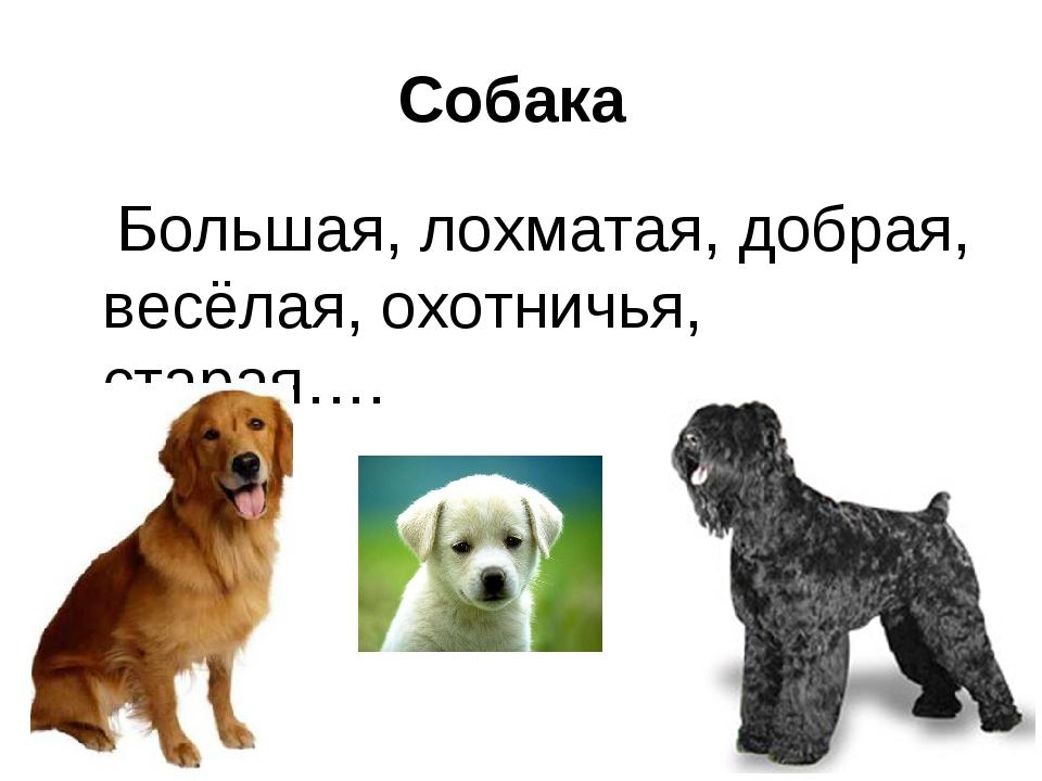 Собака Большая, лохматая, добрая, весёлая, охотничья, старая….