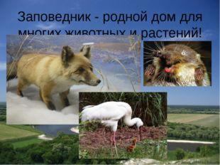 Заповедник - родной дом для многих животных и растений!