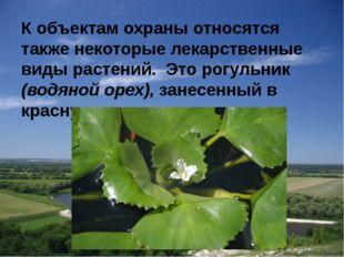 К объектам охраны относятся также некоторые лекарственные виды растений. Это