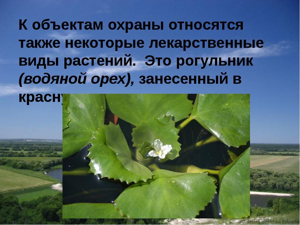 К объектам охраны относятся также некоторые лекарственные виды растений. Это...