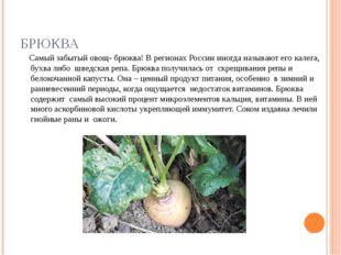 БРЮКВА Самый забытый овощ- брюква! В регионах России иногда называют его кале