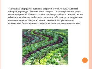 Пастернак, скорцонер, артишок, эстрагон, иссоп, стахис, салатный цикорий, ко