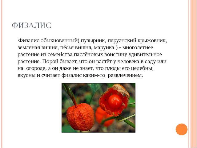 ФИЗАЛИС Физалис обыкновенный( пузырник, перуанский крыжовник, земляная вишня,...