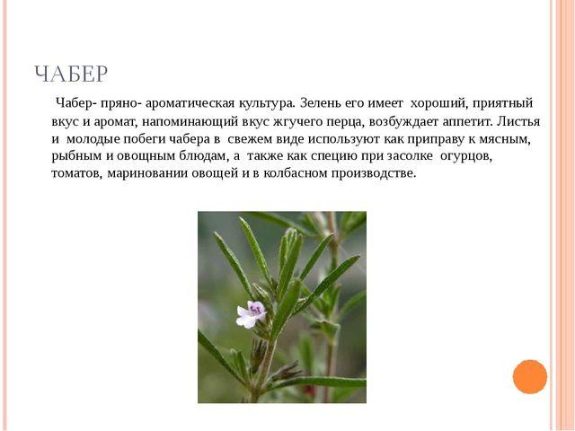 ЧАБЕР Чабер- пряно- ароматическая культура. Зелень его имеет хороший, приятны...