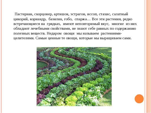 Пастернак, скорцонер, артишок, эстрагон, иссоп, стахис, салатный цикорий, ко...