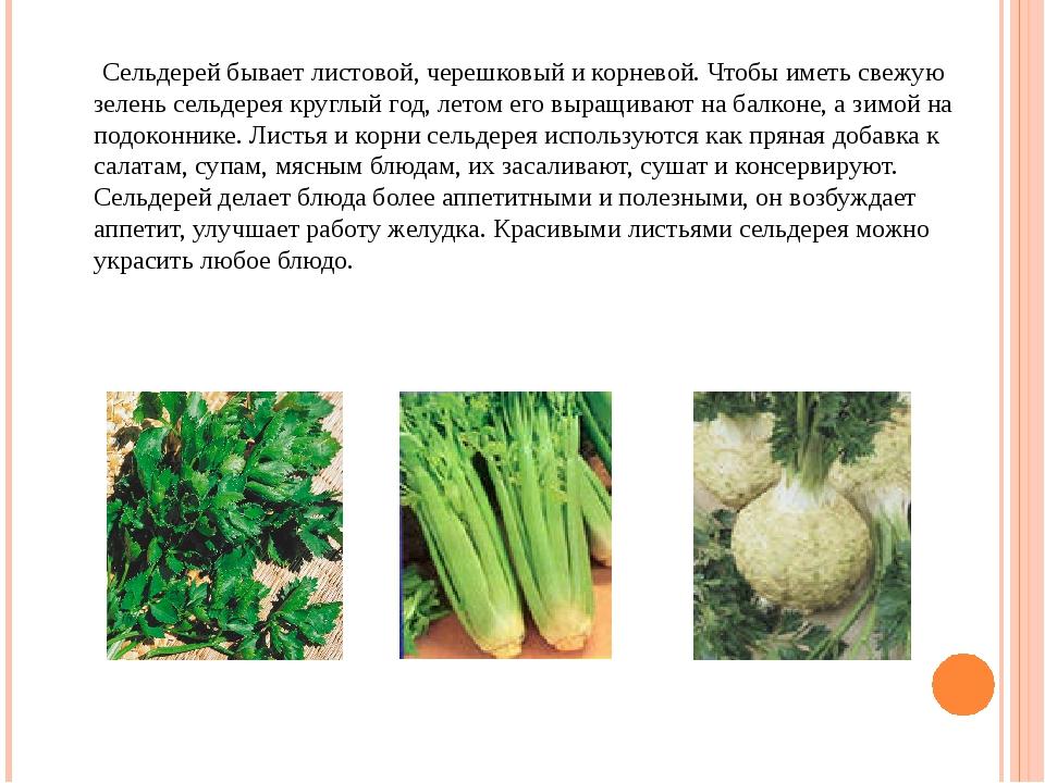 Сельдерей бывает листовой, черешковый и корневой. Чтобы иметь свежую зелень...