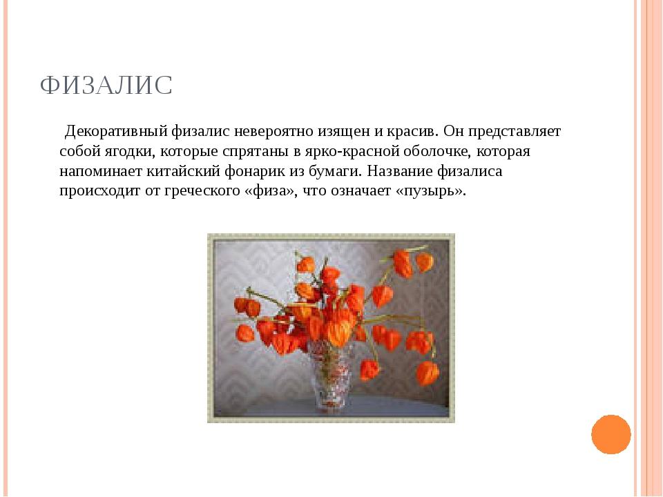 ФИЗАЛИС Декоративный физалис невероятно изящен и красив. Он представляет собо...
