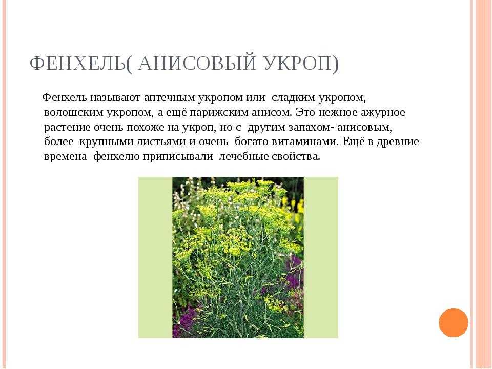 ФЕНХЕЛЬ( АНИСОВЫЙ УКРОП) Фенхель называют аптечным укропом или сладким укропо...