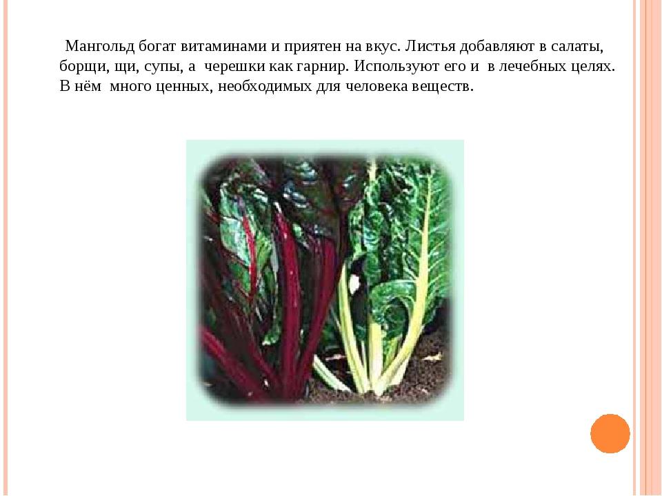 Мангольд богат витаминами и приятен на вкус. Листья добавляют в салаты, борщ...