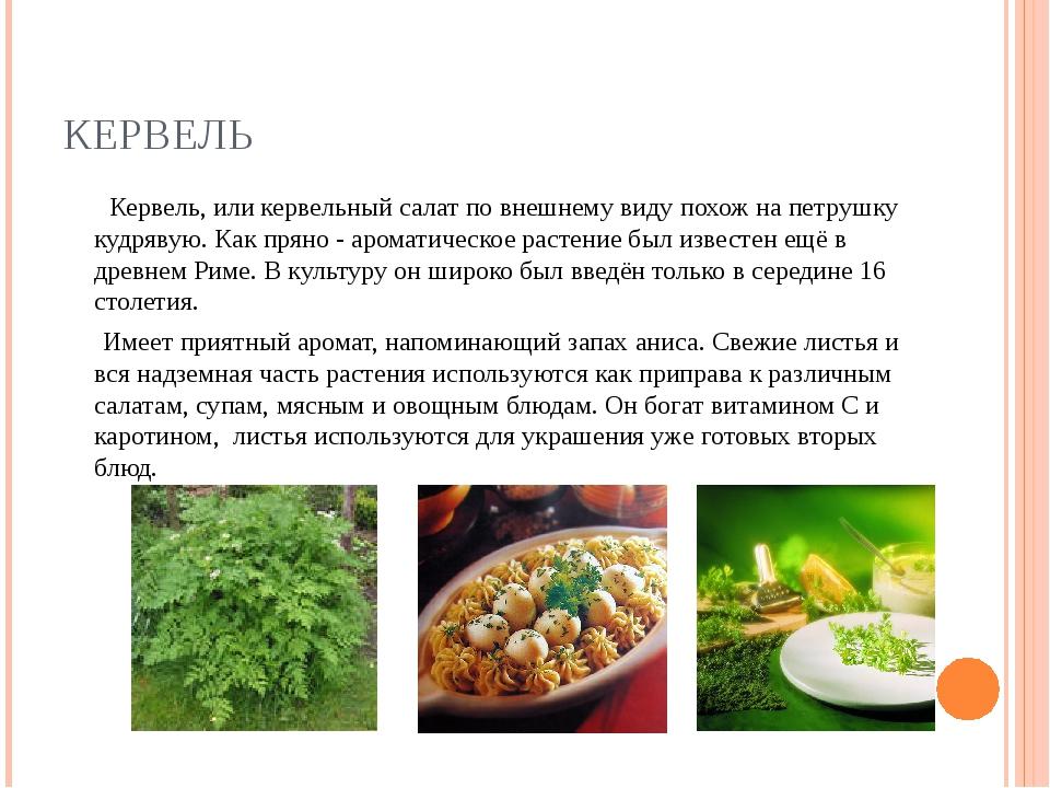 КЕРВЕЛЬ Кервель, или кервельный салат по внешнему виду похож на петрушку кудр...