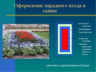 Оформление парадного входа в здание Цветники у здания администрации алиссум и