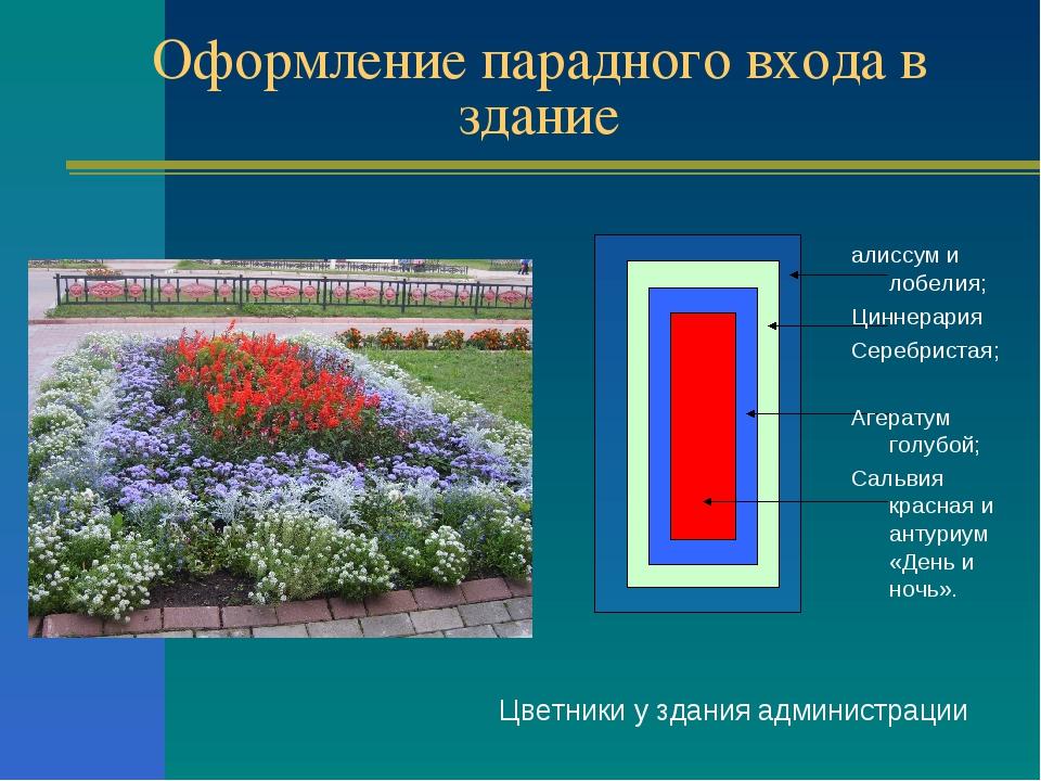 Оформление парадного входа в здание Цветники у здания администрации алиссум и...
