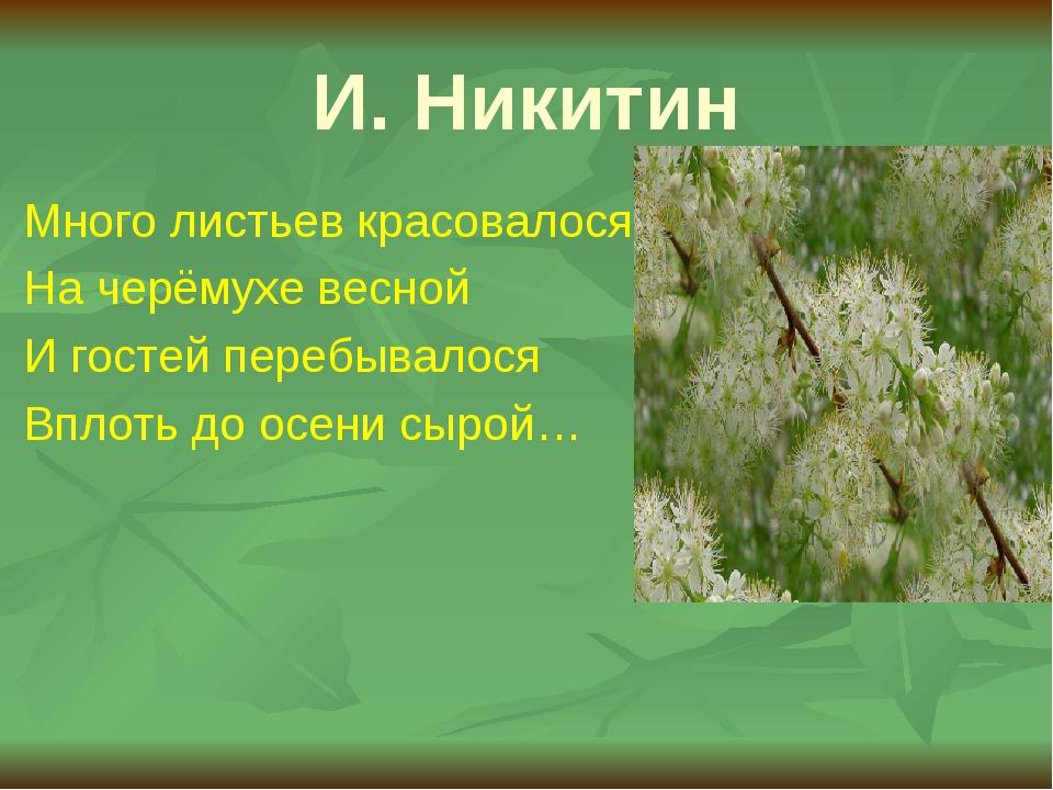 И. Никитин Много листьев красовалося На черёмухе весной И гостей перебывалося...