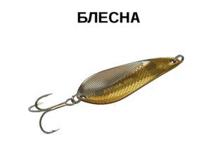 БЛЕСНА