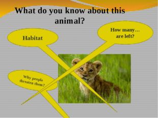 Habitat Why people threaten them? How many…are left? What do you know about t