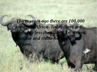 Thirty years ago there ere 100.000 rhinos in Africa. Today there are probably