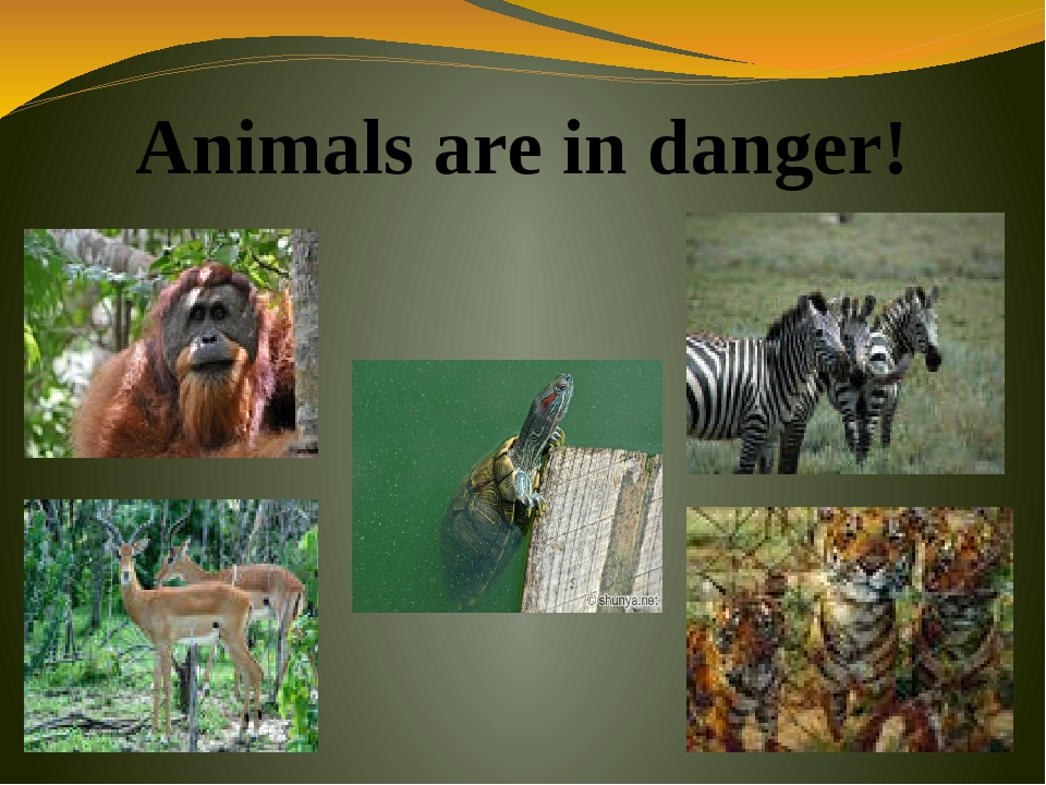Animals are in danger!