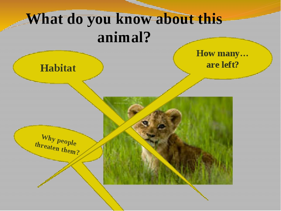 Habitat Why people threaten them? How many…are left? What do you know about t...