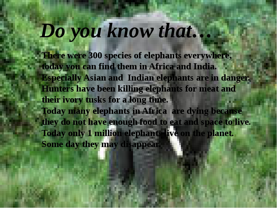 Do you know that… There were 300 species of elephants everywhere, today you c...